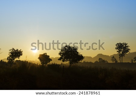 Wild mountain forest nature landscape scene background