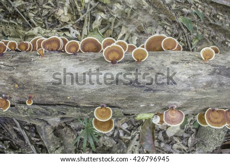 Wild mushroom Spontaneous natural timber with multi-colored foods and herbs. - stock photo
