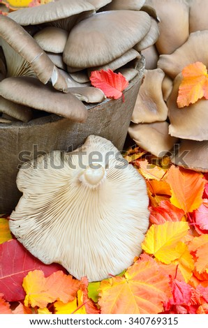 Wild mushrooms against a background of autumn leaves - stock photo