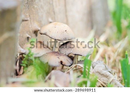 Wild mushrooms close-up