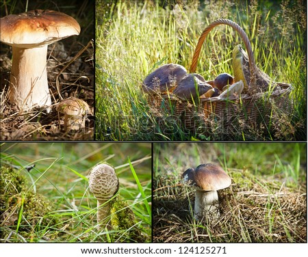Wild mushrooms in forest - stock photo