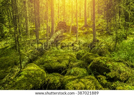 Wild Nature background. Big tree lie on the ground. Stones covered with green moss near lakes park forest.
