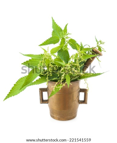 Wild nettles in a mortar with pestle isolated  - stock photo