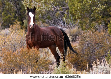 Wild Open Range Horse In Nevada Desert - stock photo