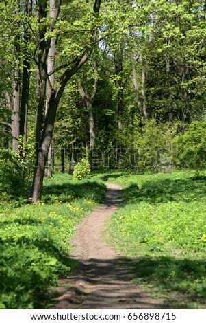 wild path in fresh green forest in spring