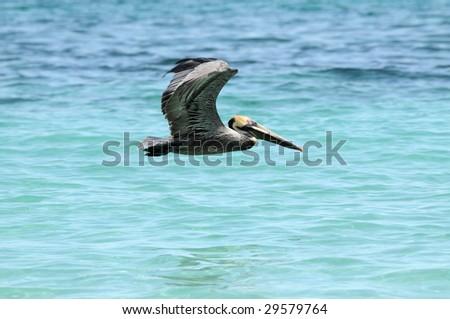 Wild pelican flying over blue sea water - stock photo