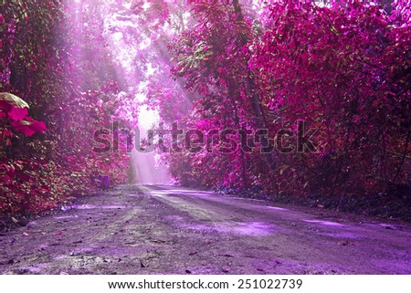 Wild pink with love in valentine day,Road in green forest with sunlight in the morning,Pink fantasy style - stock photo