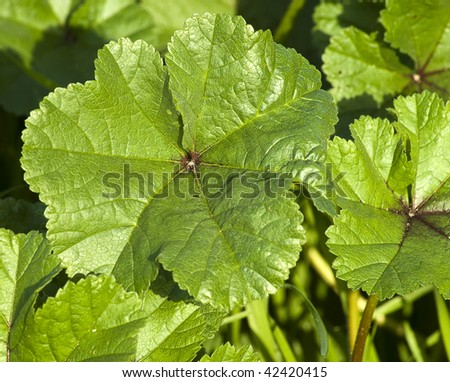 wild plant closeup - stock photo