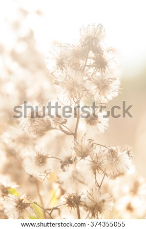 Wild plant, weed, grass, with seeds in uncultivated field - stock photo