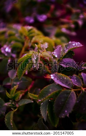 wild plants in shade of purple glass