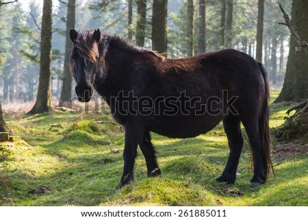 Wild pony horse grazing in old forest