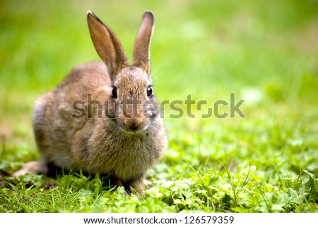 Wild rabbit in the nature - stock photo