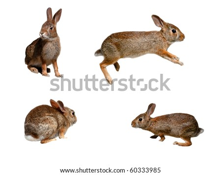 Wild rabbits collage on pure white background