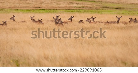 Wild red deer and landscapes of Richmond Park, London, England. - stock photo