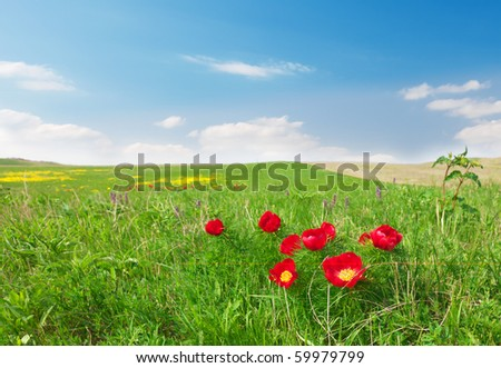 wild red flowers - stock photo