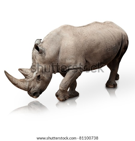 wild rhinoceros walking on a reflective surface - stock photo