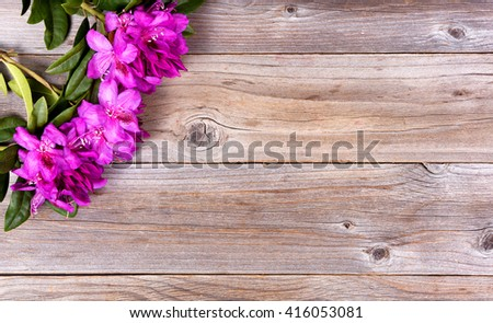 Wild rhododendron flowers on stressed wood in upper left corner of frame. Overhead view.