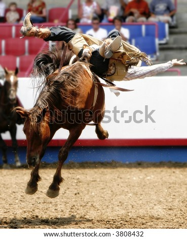 Wild Rodeo Bareback Action (shallow focus) - stock photo