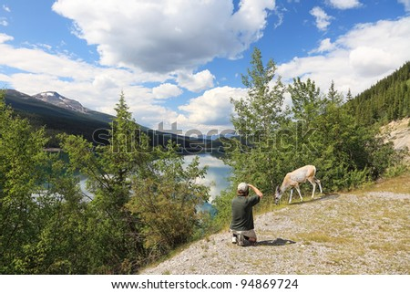 Wild roe and the tourist photographing it on the lake coast in national park. Rocky mountains. Canada. - stock photo