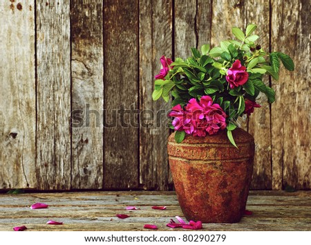 Wild roses in a rustic vase on a grunge wood backdrop with copy space. - stock photo