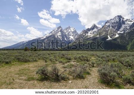 wild sage and wilder mountains - stock photo