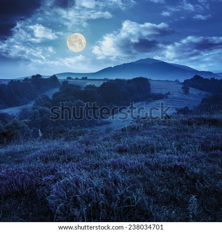 wild savory and mint  in  fog on hillside meadow in high mountains at night in full moon light - stock photo
