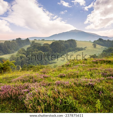 wild savory and mint  in  fog on hillside meadow in high mountains at sunrise in morning light - stock photo