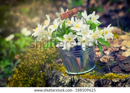 Wild spring flowers anemone in bucket on stump in forest. Retro stylized - stock photo