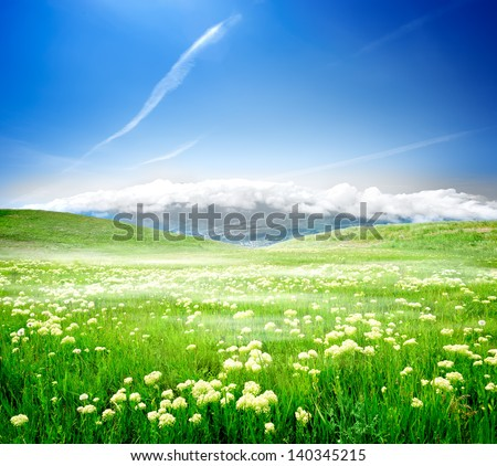 Wild spring flowers on a green meadow - stock photo