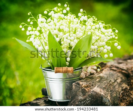Wild spring lily of the valley flowers in bucket in forest - stock photo