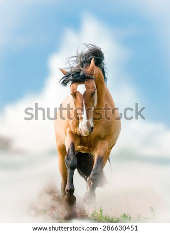 wild stallion with wave splash on a background - stock photo