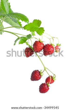Wild strawberries on a white background - stock photo