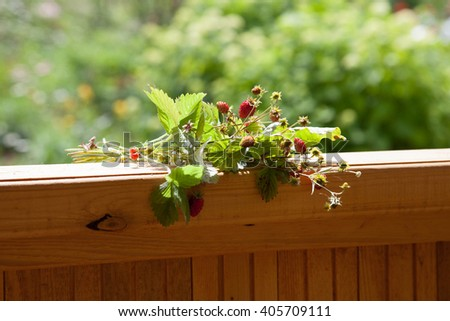 Wild strawberry branch on a summer arbor - stock photo