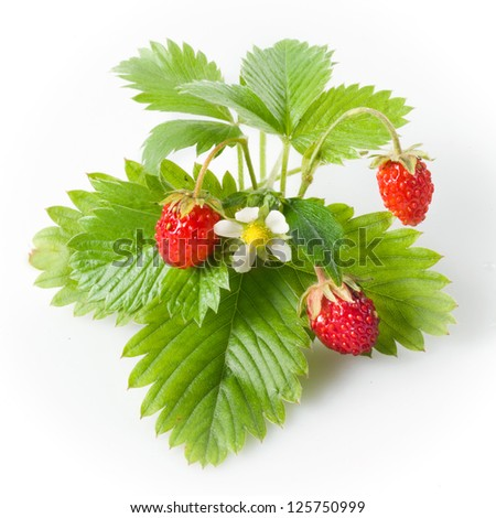 Wild strawberry isolated on white - stock photo