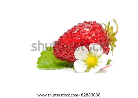 Wild Strawberry with Flower and Leaf Isolated on White Background - stock photo