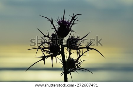 Wild thistle in foreground on skyline with color effects - stock photo