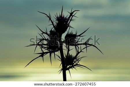 Wild thistle on colored skyline at sunrise - stock photo