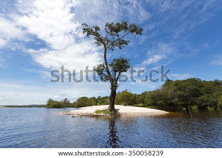 Wild tree and sand beach on the Amazon River in Manaus, Amazonas State. Brazil 2015 - stock photo
