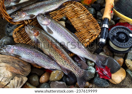 Wild trout spilling out of fishing creel, with fly reel, pole and late autumn leaves on wet river bed stones - stock photo