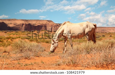 wild white horse eating grass at Monument Valley, Arizona - stock photo
