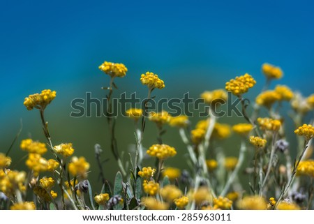 Wild white rock flowers on background stock photo royalty free wild white rock flowers on the background of the sea mightylinksfo Gallery