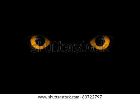 wild yellow eyes isolated on black - stock photo