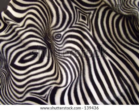 Wild Zebra print on fabric - stock photo