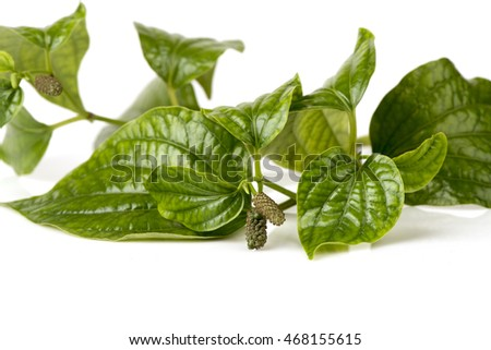 Wildbetal Leafbush (Piper sarmentosum Roxb.), Vegetables, herbs, medicinal properties.