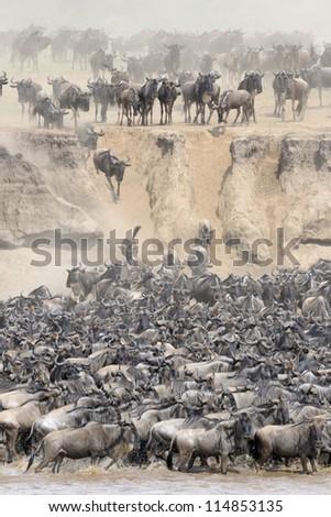Wildebeest crossing the Mara river - stock photo