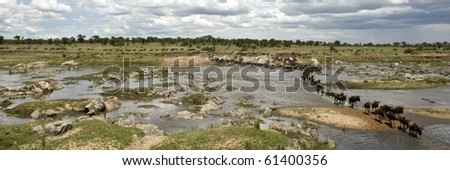 Wildebeest crossing the river in the Serengeti, Tanzania, Africa - stock photo