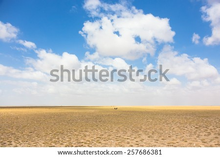 Wildebeests in vast african wilderness. Dramatic dry landscape of Amboseli National Park, formerly Maasai Amboseli Game Reserve. - stock photo
