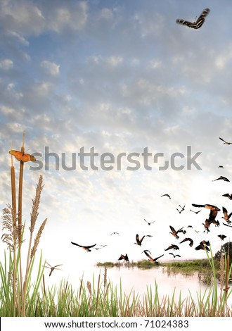 Wilderness scene on white - stock photo