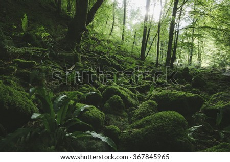 wilderness scene with green forest and moss - stock photo