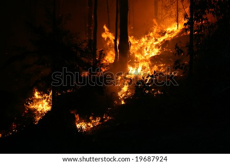 Wildfire at night - stock photo